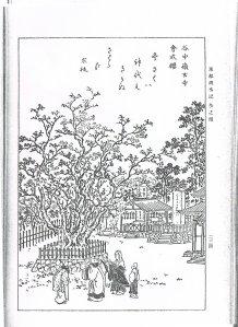 谷中領玄寺会式桜(『東都歳時記』)