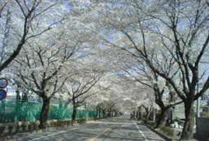 富岡町夜の森公園(富岡町ホームページより)