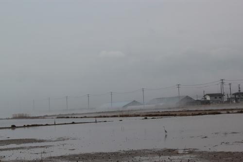 水没した小高の農地(2012年4月25日撮影)