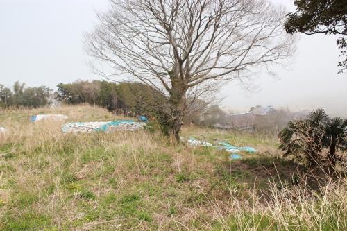 浦尻貝塚(2012年4月25日撮影