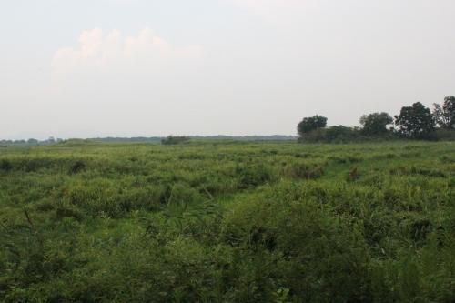 旧谷中村遺跡の光景(2013年8月11日撮影)