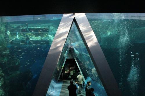 潮目の海(大水槽)