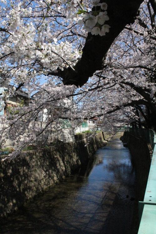 白子川(2014年3月31日撮影)