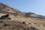 旧松木村の祠と生え出した草木(2016年2月27日)